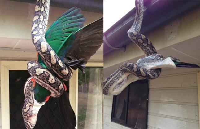 See how dragon hanging from the ceiling and meet King Parrot was swallowed
