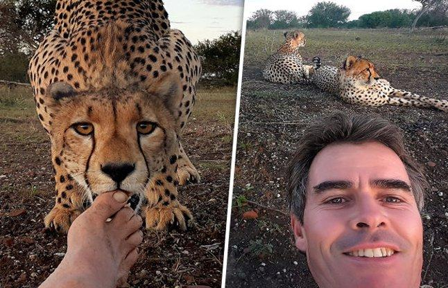 Photographer's courage, went through five wild leopard drag the photo